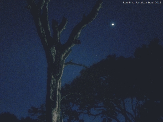 Venus between the dead tree and the treetops